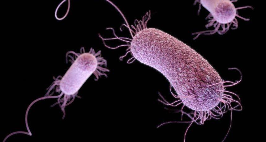 Ce sunt superbacteriile si cum ne afecteaza