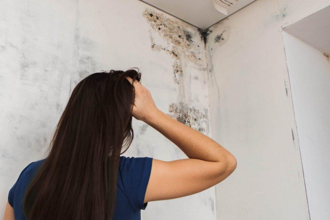 Solutie antimucegai: cum scapi de mucegaiul de pe perete