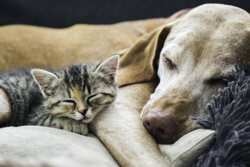Bolile cu transmitere de la animale la om
