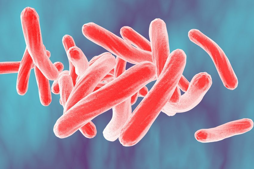Bacteria Mycobacterium tuberculosis
